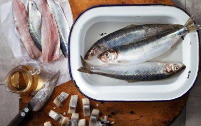 22. August –Tag der Fische